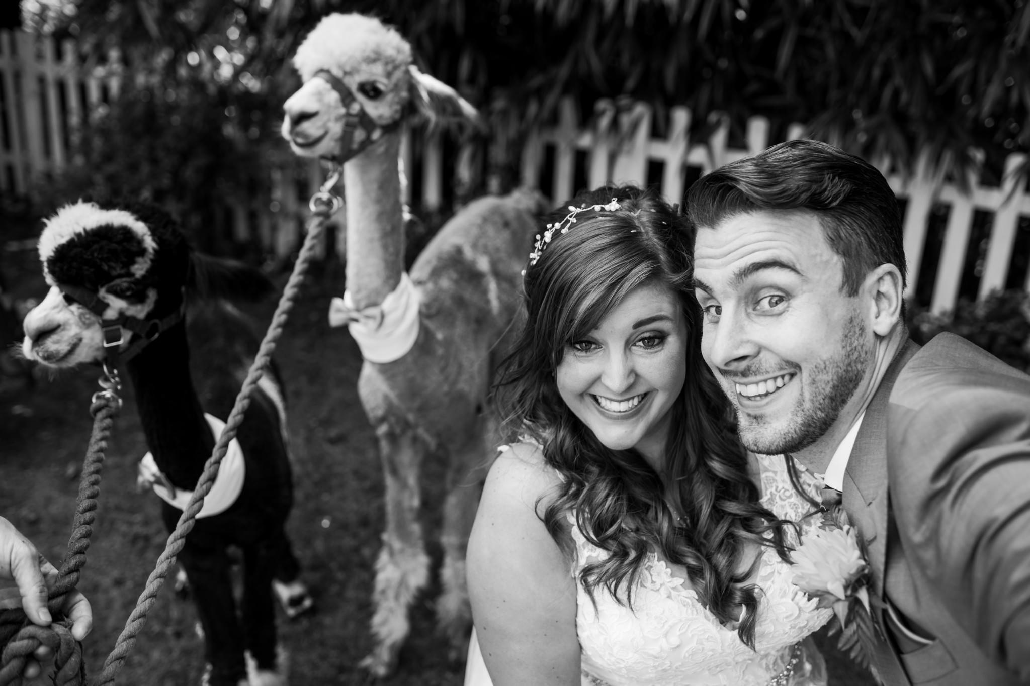 Alpaca wedding selfie at Gordleton Mill